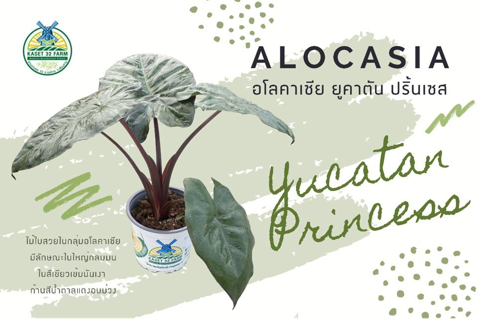 Yucatan Princess